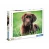 Kölyök kutya 500 db-os puzzle - Clementoni