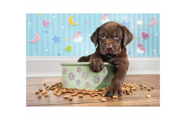 Kölyök kutya 180 db-os puzzle - Clementoni